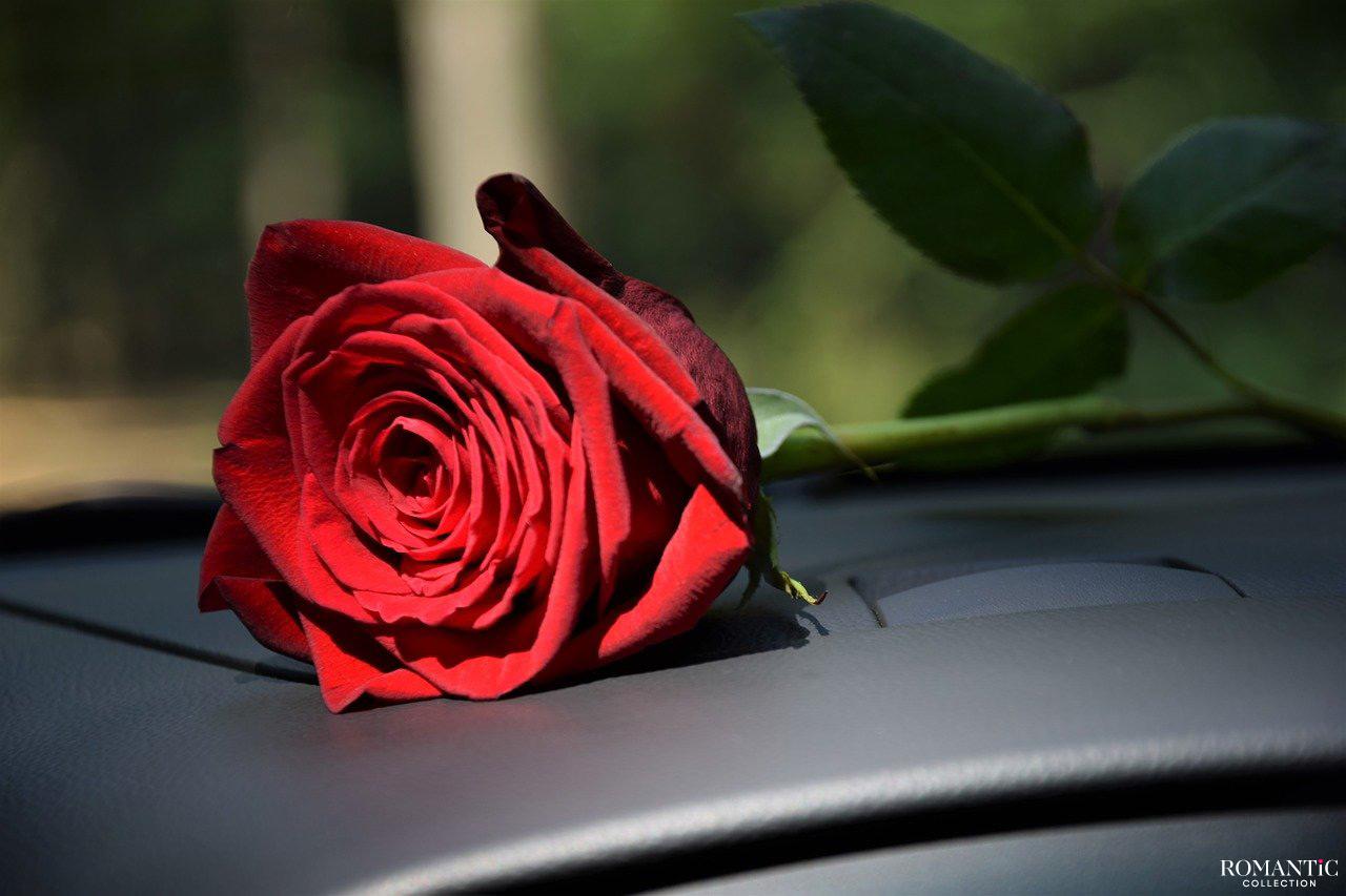Роза под дворник авто