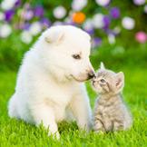 Сообщество Домашние животные
