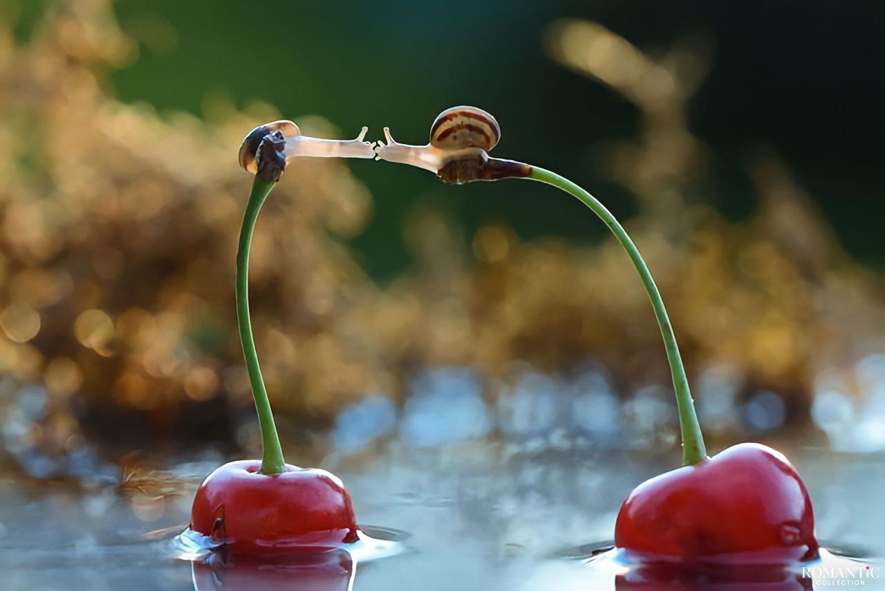25 фотографий, доказывающих, что в мире животных существует романтика и любовь