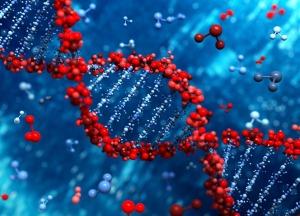 Любовь придумали гены
