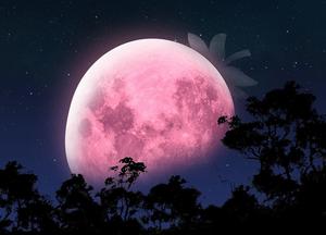 Красивое затмение «земляничной» Луны