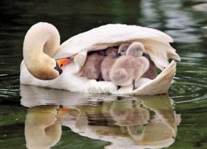 Любовь и забота мамы
