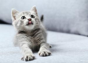 Видео: Смешные и милые видео с животными
