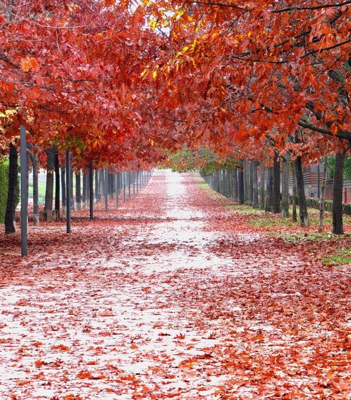 Галерея Осень для влюбленных