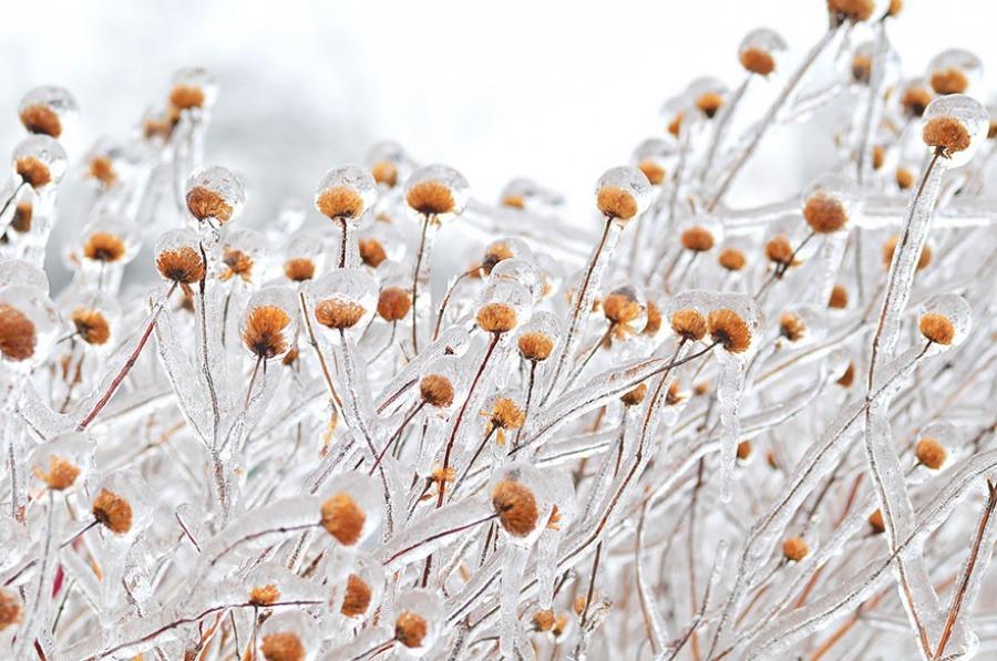 20 шедевров природы на рубеже зимы и весны
