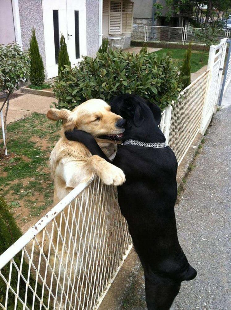 Собачьи объятия