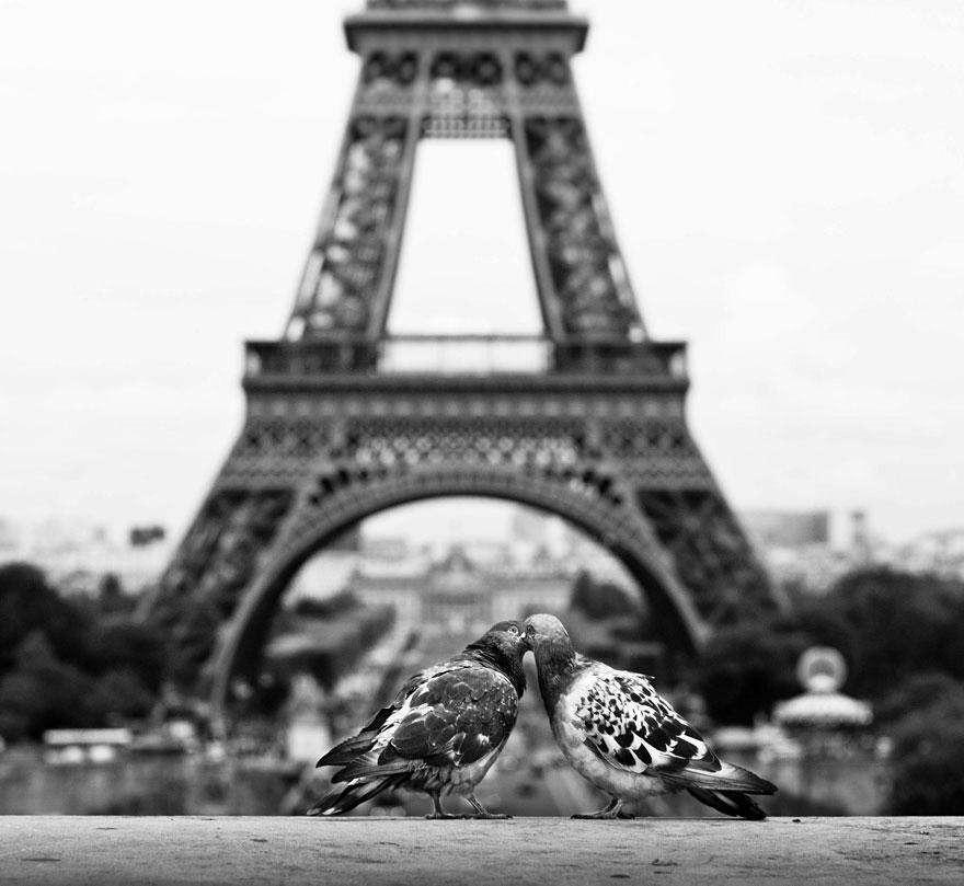 Голубки в Париже
