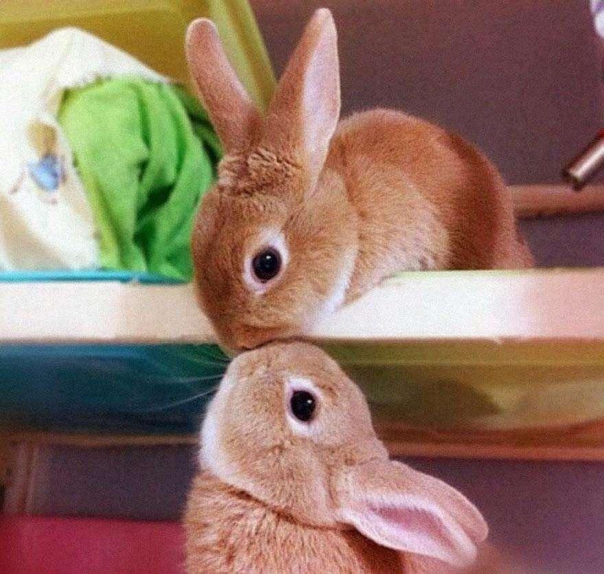 Кроличьи чмоки