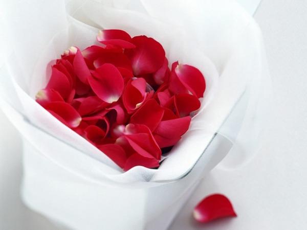 Обои о любви: Лепестки роз