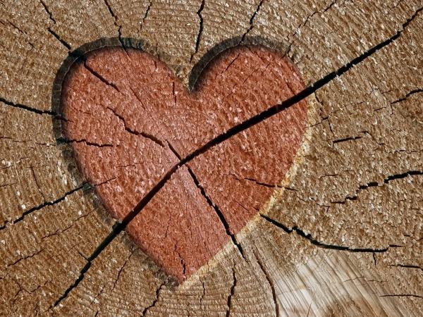 Обои о любви: Сердце на дереве