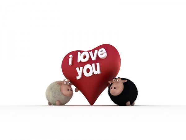 Обои о любви: Влюбленные овечки