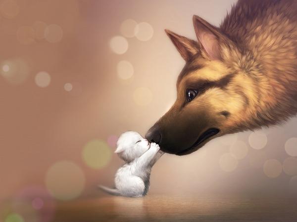 Обои о любви: Котенок и овчарка