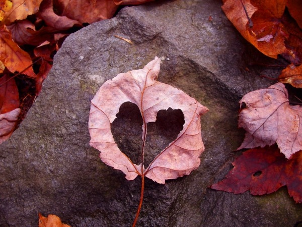 Обои о любви: Осенний листочек