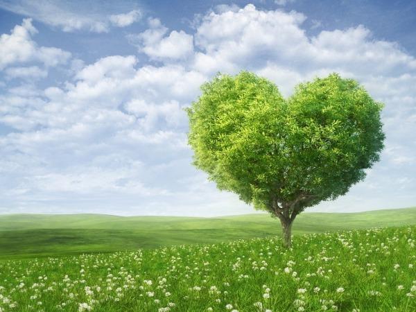 Обои о любви: Дерево любви