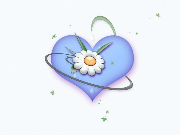 Обои о любви: Сердце с ромашкой