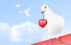 Обои о любви: Голубь с сердцем