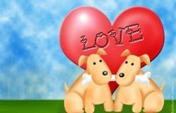 Обои о любви: Влюблённые собачки