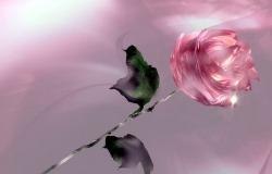 Обои о любви: Роза
