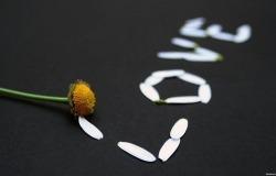 Обои о любви: Love из лепестков