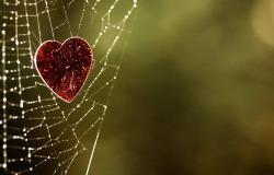 Обои о любви: Сердце в паунтинке