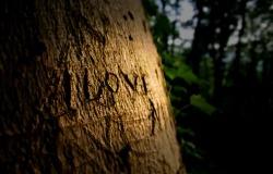 Обои о любви: Надпись на дереве