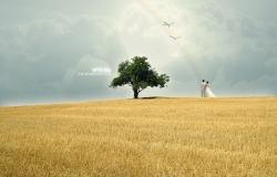 Обои о любви: Свадьба на пшеничном поле