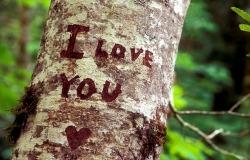Обои о любви: Надпись на дереве I love you