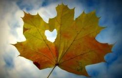 Обои о любви: Осенний лист и сердце