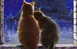Обои о любви: Влюбленные коты