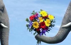 Обои о любви: Букет цветов для любимой