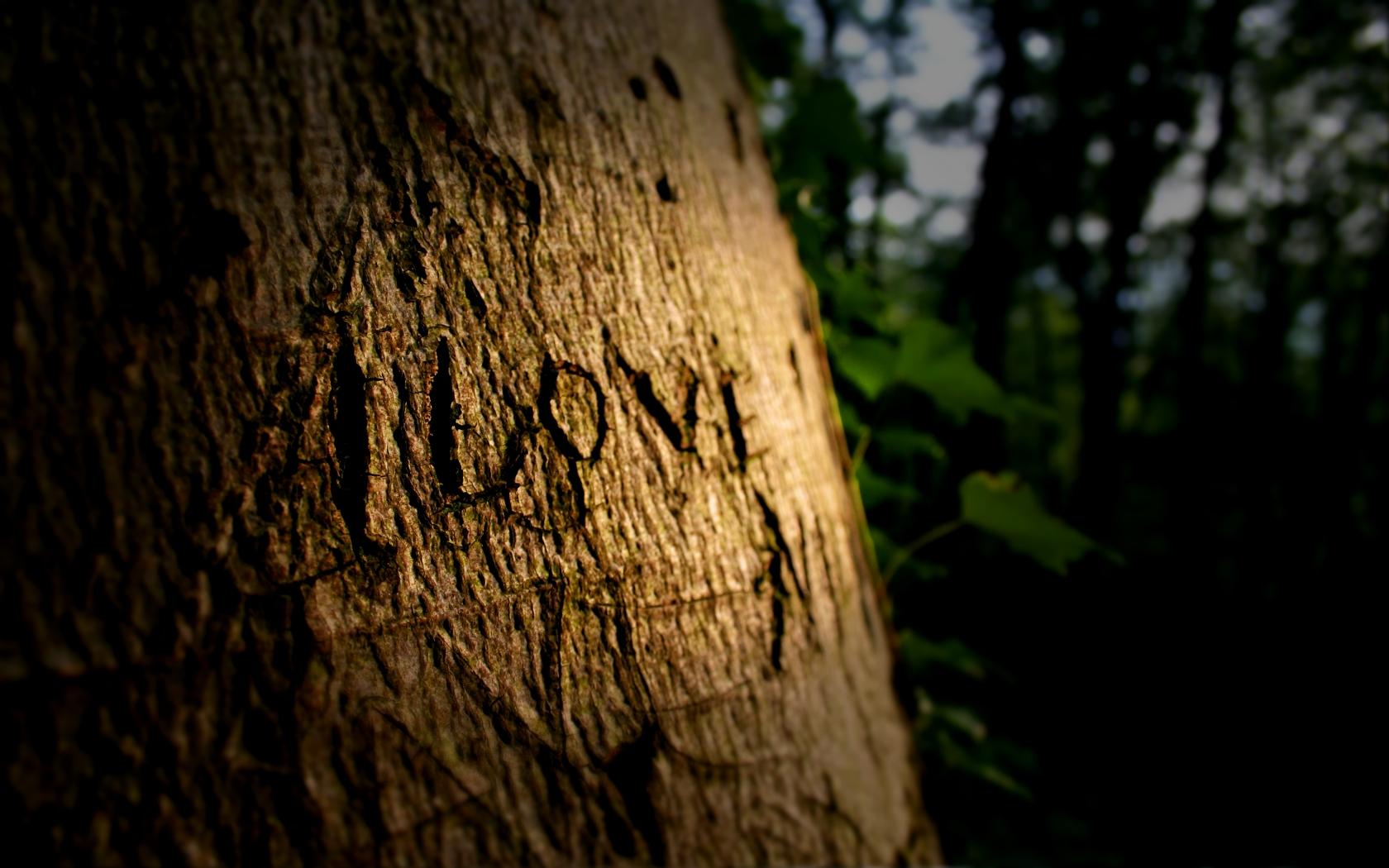 Надпись на дереве в картинках, удачной рыбалки