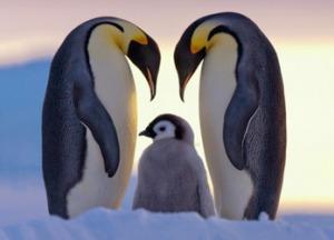 10 животных, у которых можно поучиться верности и любви
