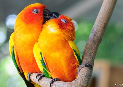 20 фотографий, наполненных ожиданием зимы